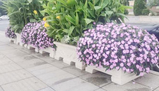 【组图】55.7万余株鲜花,安排妥了!