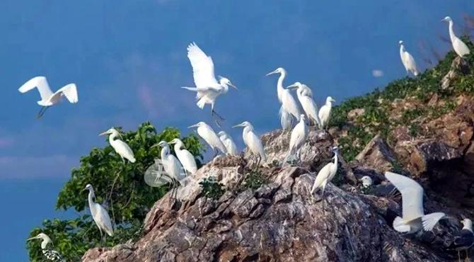 长海县获中国黄(渤)海候鸟栖息地(第二期)候选地提名